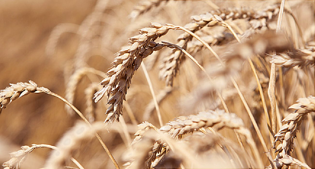 Best Diet Plan For Wheat Allergy